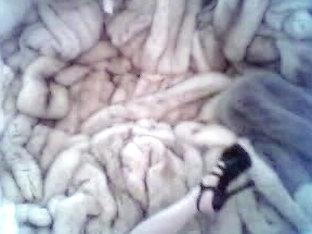 Amateur CD loves fur