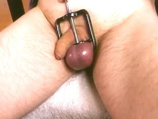 testicle clamp
