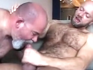 Bald Hairy mandy Bear(s)