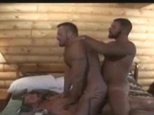 3 bears 3 osos