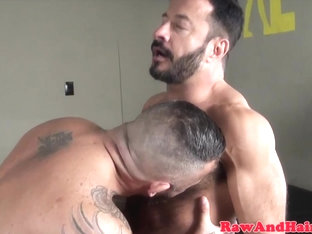 Muscular bears breeding and cocksucking