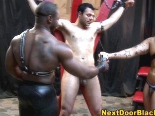 Bound muscly whitey sucks black cock